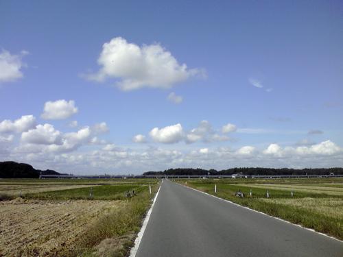 500ポタ畑.jpg